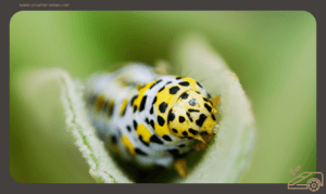 Biotop im Garten - Der lebendige Rasen - Ungeziefer Ratgeber -Schnelle Hilfe