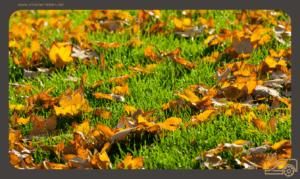 Die beste Rasenpflege im Herbst – In 4 Schritten in den Winter – Der perfekte Rasen