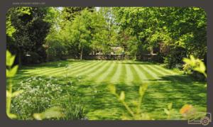 Die richtige Rasenpflege im Sommer - 3 Schritte zum Erfolg