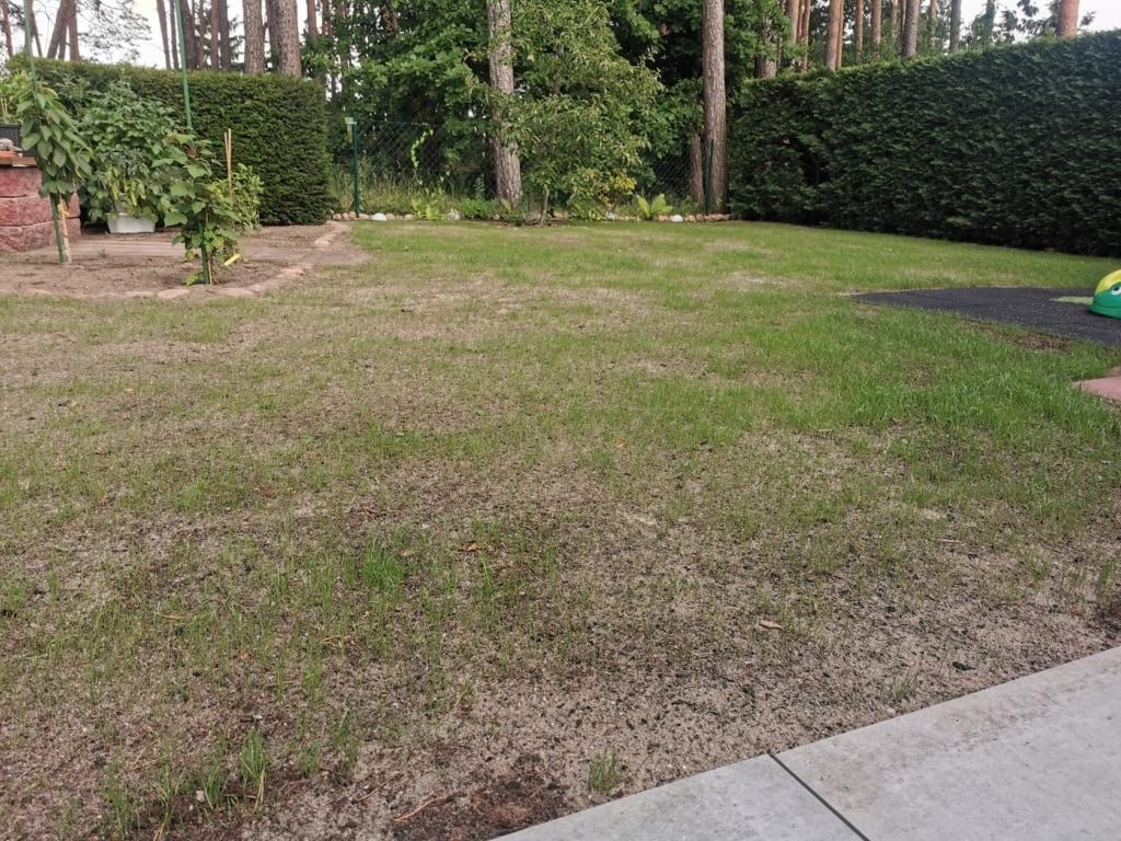 Der Rasen wächst nach einer Neusaat - Rasen neu anlegen leicht gemacht