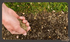 Rasensamen säen - Rasen richtig anlegen - die besten Tipps und Tricks